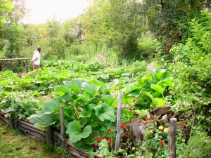 Growing a Healthy Garden - Workshop 2 - Planning for Autumn and Winter @ Quercus Beechworth